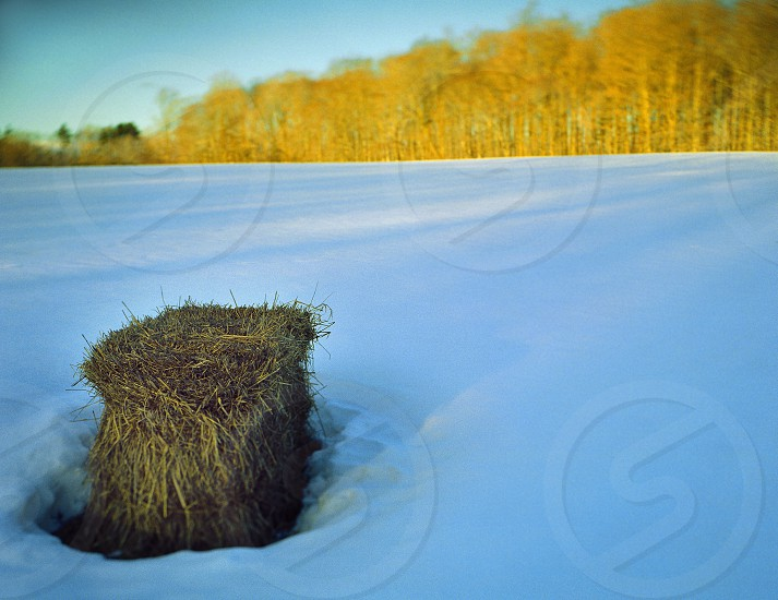 A bale of hay in a field in winter. photo
