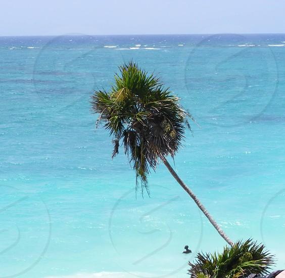 green palm tree near the sea photo