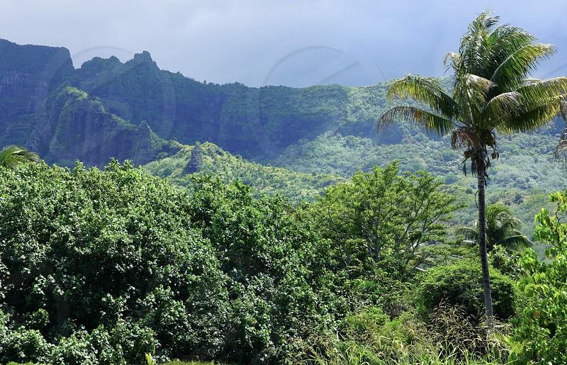 Green landscape Moorea Polynesia Island mountain nature tree  photo