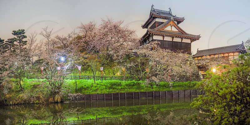 Koriyama Castle with Cherry Blossoms at night. photo