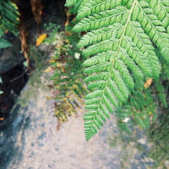 green leaves macro photography photo