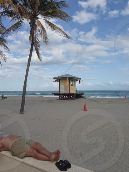 Hollywood Florida Beach Lifeguards palm Tree photo