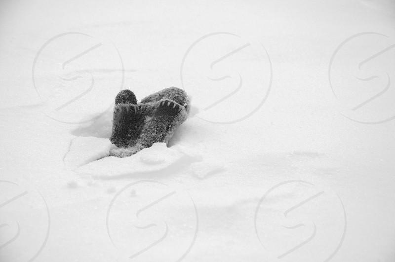 mitten in snow photo
