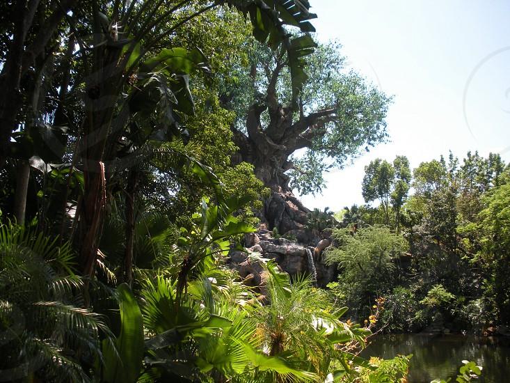 Rainforest jungle photo