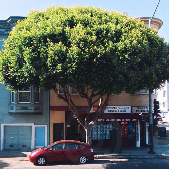 red prius under large tree near premium wines store front photo