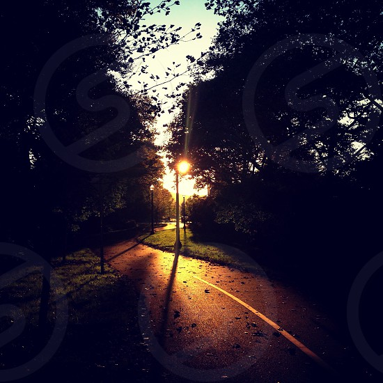view of the sun being covered by tree on a path road  photo