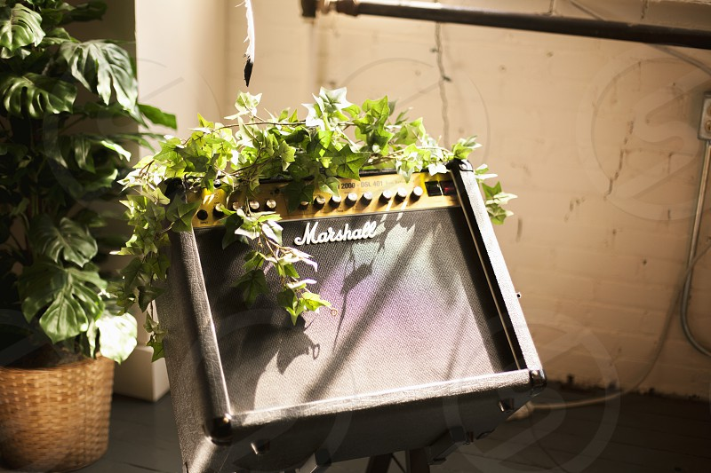 Music grows and grows. photo