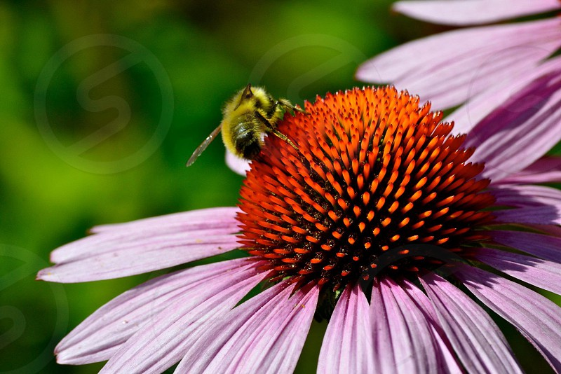 Pollination close-up photo