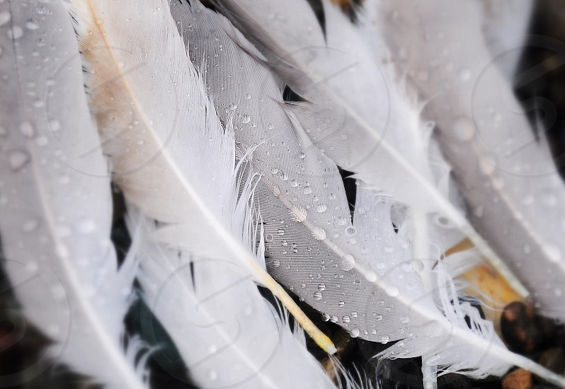 white feathers with water dew photography photo