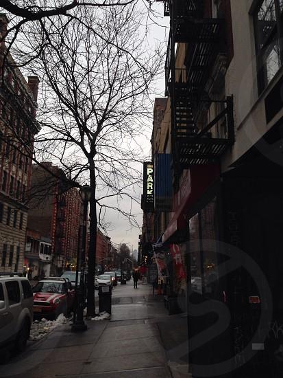 NYC street buildings tree photo