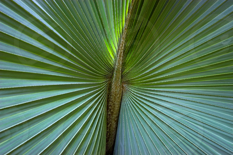 Natures Patterns photo