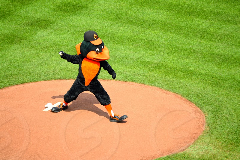 The Baltimore Oriole throwing pitches before the game starts at Camden Yards Baltimore MD photo