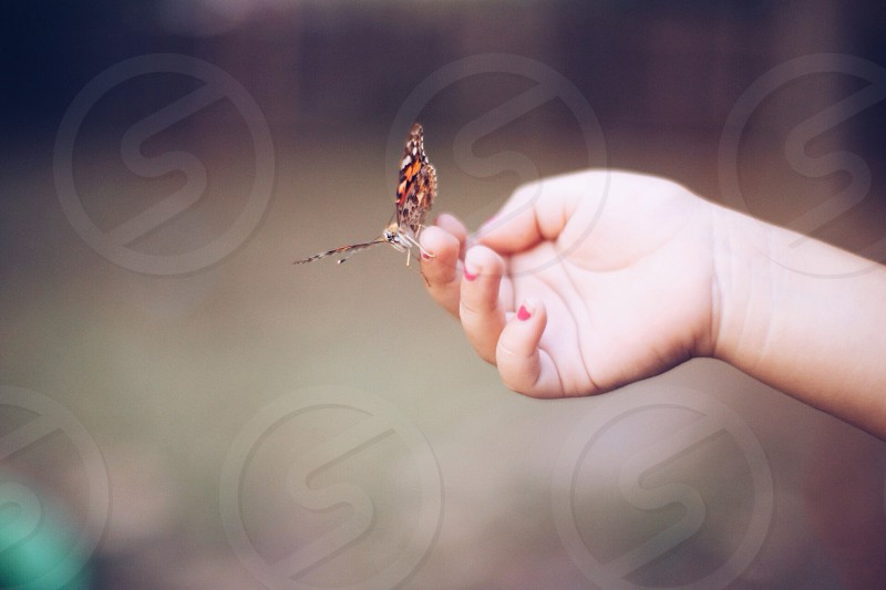 red brown and white butterfly on hand photo