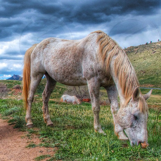 Horse I saw during a hike in Golden Colorado. photo