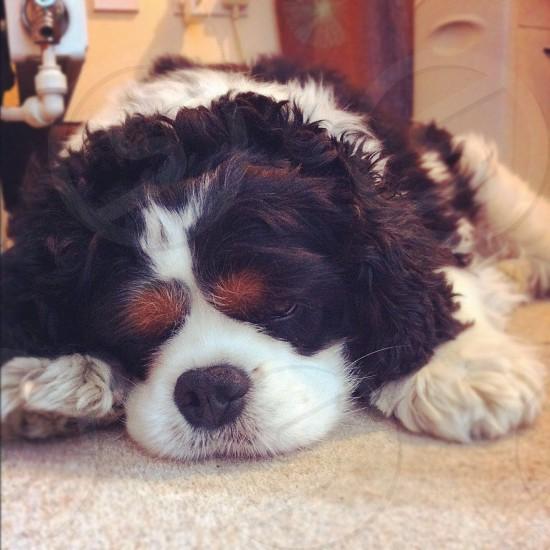 My dog sleeping :) photo
