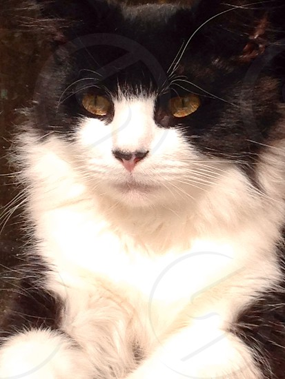 Mr. Kitty fluffy buddy photo