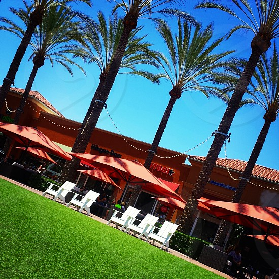 Southern California lifestyle - palm trees lounge chairs grass shopping relaxation photo