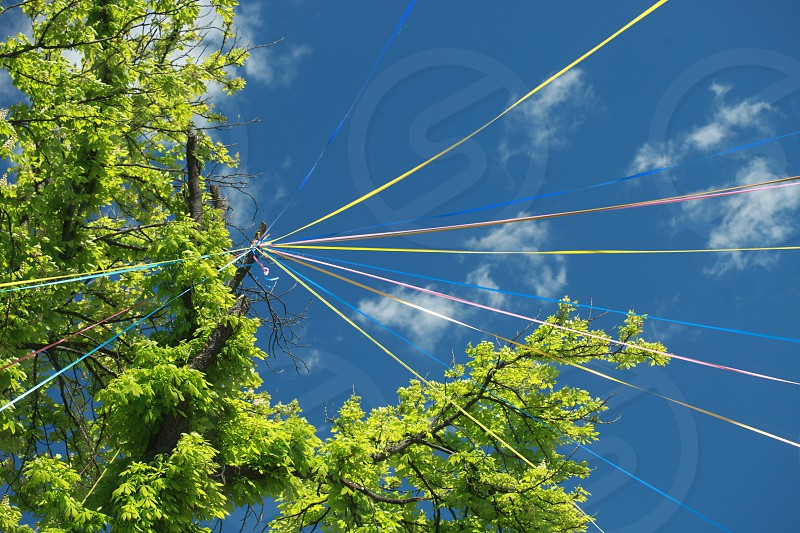 green leaf tree with post and prism rays in low angle photography photo