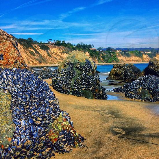 she sells seashells by the seashore photo