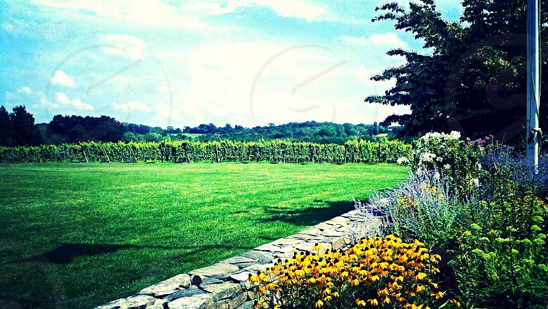 Winery in Connecticut photo