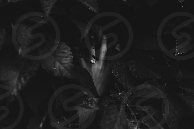 grayscale photography of person's left hand wearing diamond ring covered with leaves photo