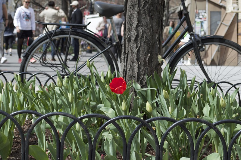 Spring comes to the West Village New York. photo