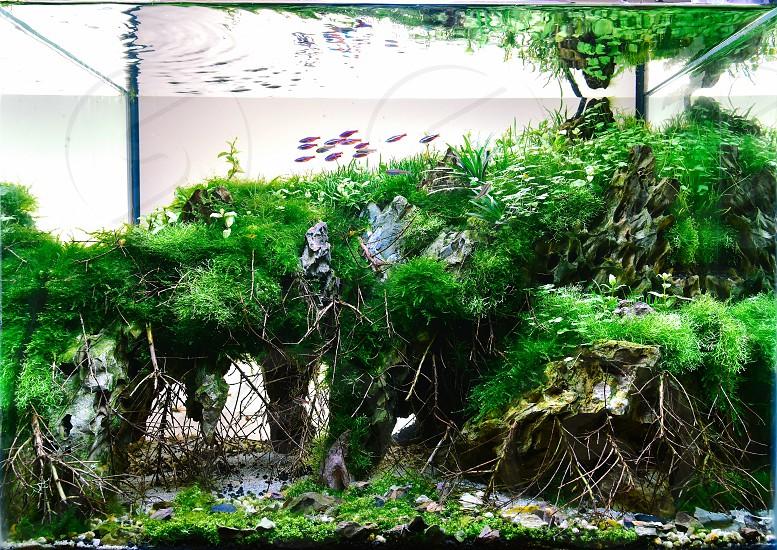 JoshScape Aquarium Nature Aquarium Aquascaping. photo