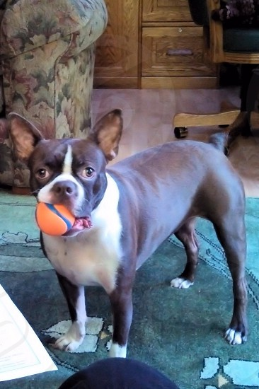 Fetch? photo