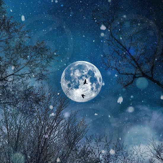 Night of the full moon snowy photo