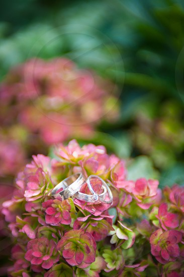 marriage love rings flowers purple pink green detail diamond leaves petals gold platinum silver matrimony vows outside outdoor photo