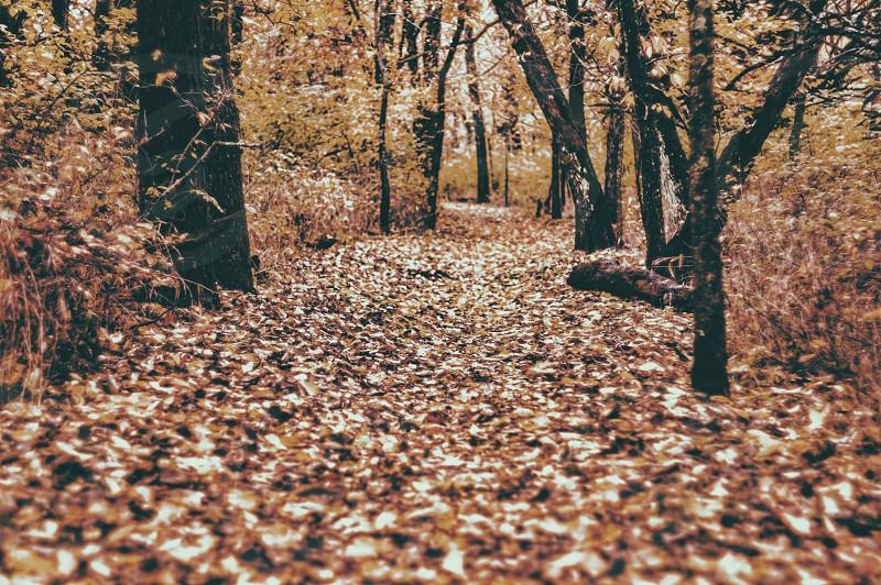 brown pathway between green trees photo