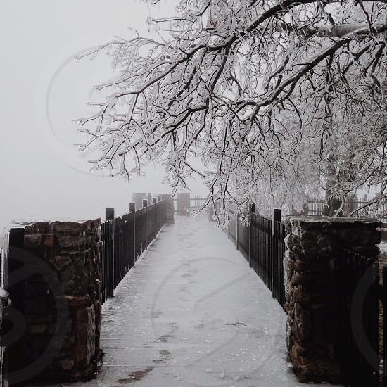 dried tree on snow season photo
