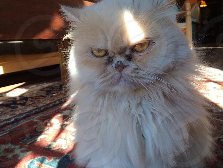 Cat funny cat photo
