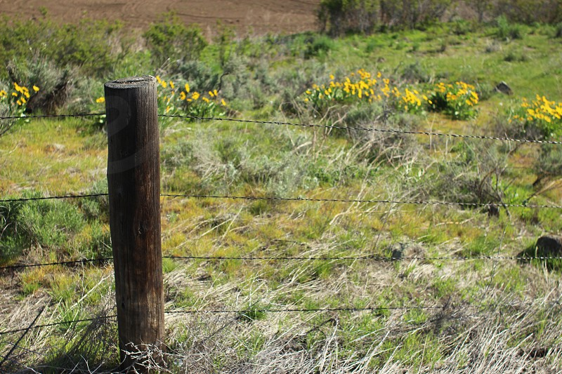 Rugged barbed wire fence surrounded by beautiful wildflowers photo