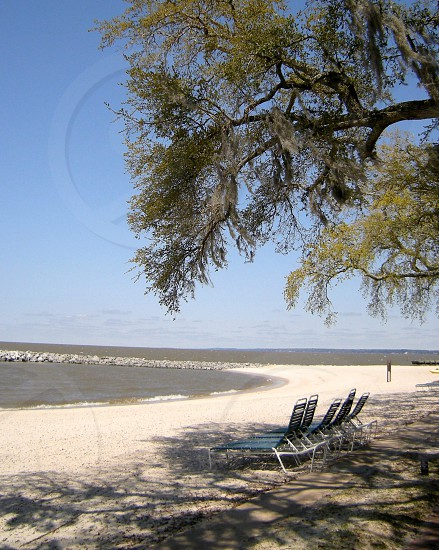 Beach with tree and chaise lounges photo