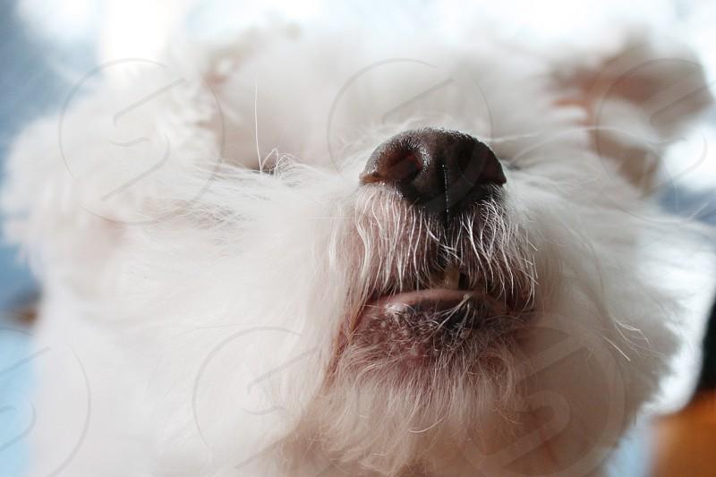 Dog animals nose pets photo