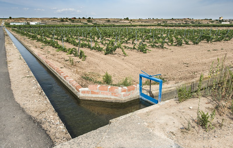 Vineyards and close up irrigation canal. photo