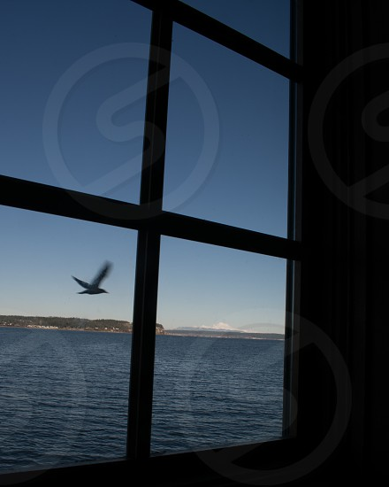 Bird Flying Through the Window photo