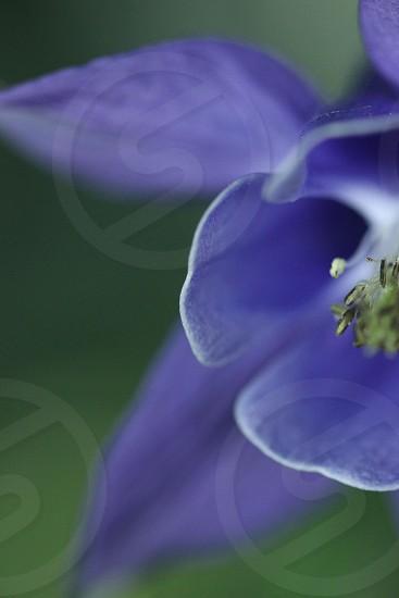 purple flower summer bloom macro macrophotograph photo