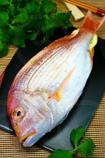 Whole white fish-Japanese style background photo
