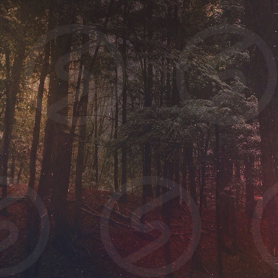 Trees forest mood winter seasons photo
