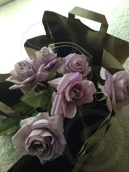 purple roses in bag photo
