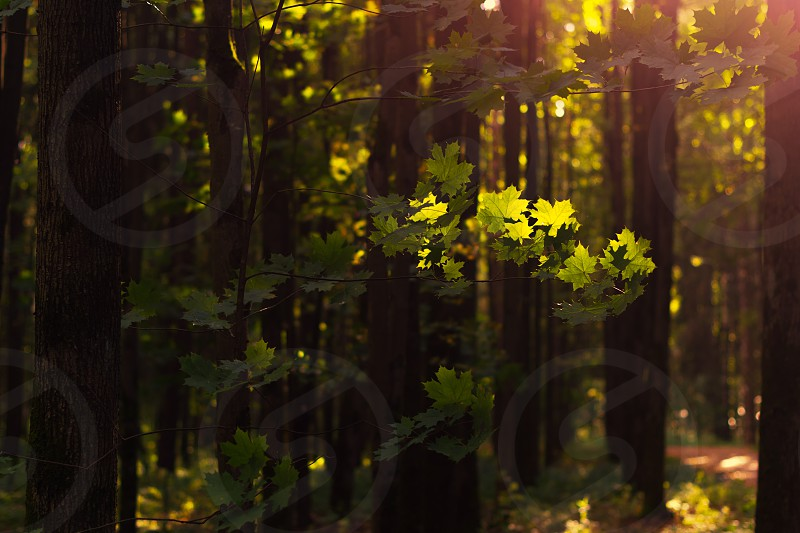sun rays reflect on green tree leaves photo