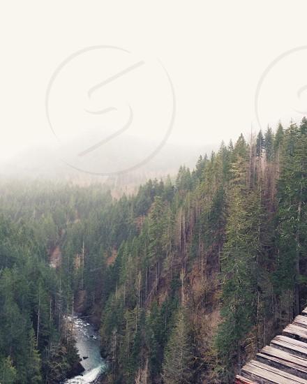 green tress and lake photo