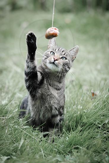 Portrait of domestic cat photo