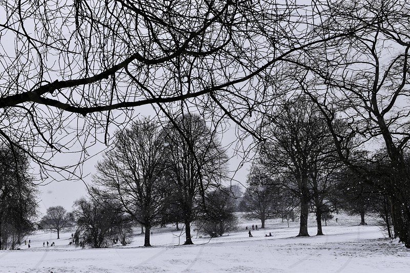 Snow covered parkland with people sledging. photo