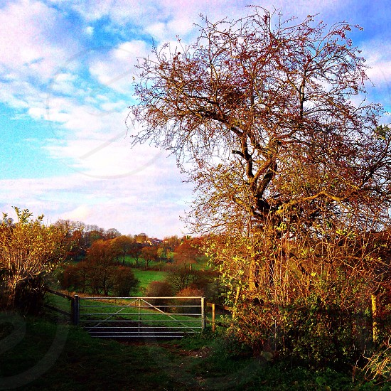 Landscape countryside gate sunlight autumn photo