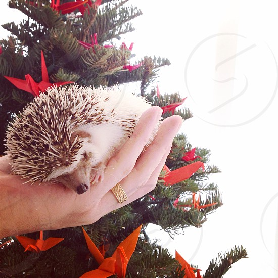 Christmas holiday christmas tree origami ornaments hedgehog merry happy home cozy small pets photo