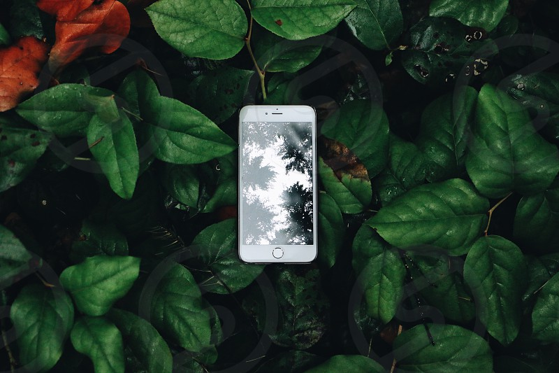 silver iphone 6 on ground with green plants photo