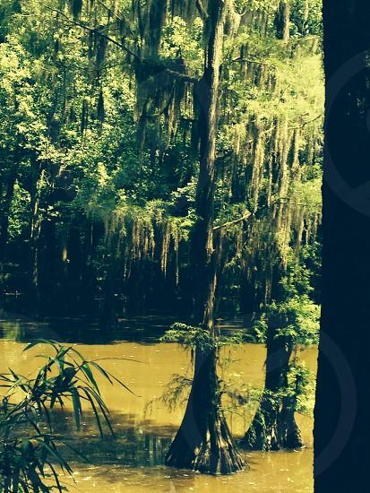 Nature Swamp photo
